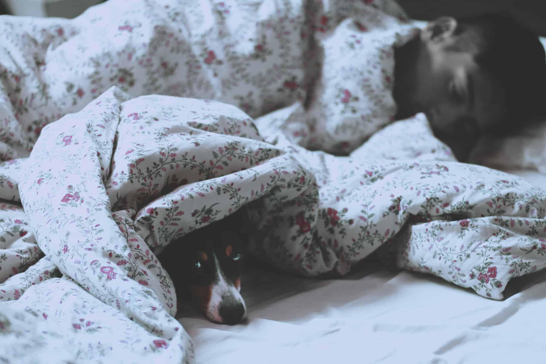 warum träume ich von meiner ex